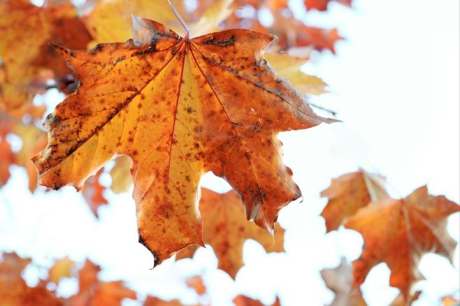 Gold on White Leaves_edited-1