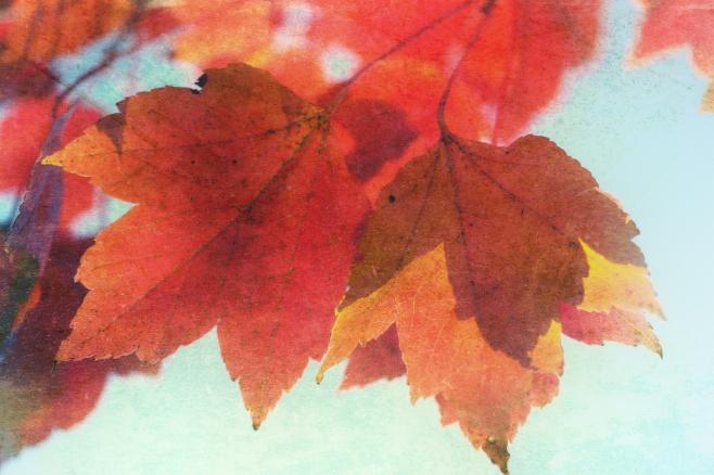 Leaves Searust