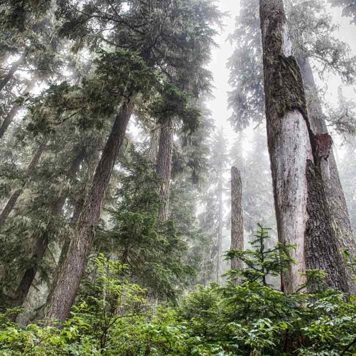 fog-trees-sky