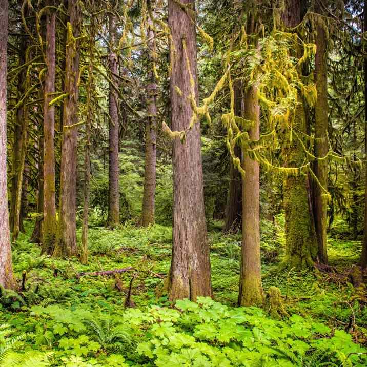 mossy-trees-mrnp