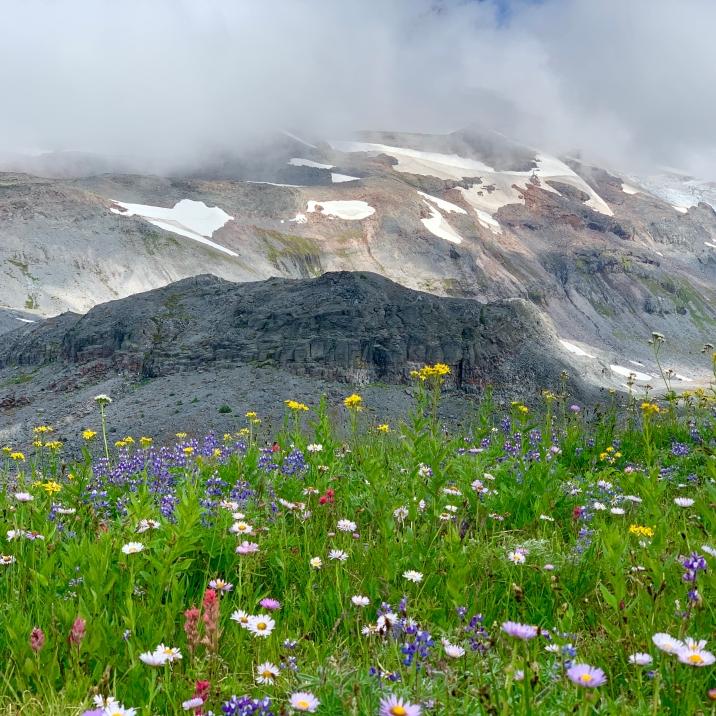 paradise-glacier
